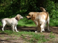 Elvis-playing-with-Maggie-summer-2012