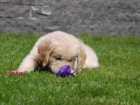 pup in de tuin
