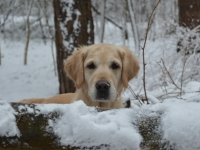 Gina bijna 8 jaar in de sneeuw