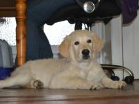 Maggie als pup