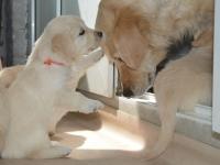 Maggie met pup