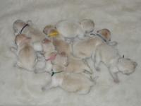 Pups 1 dag oud