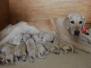 pups Maggie & Thomas