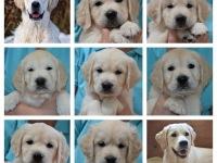 fotocollage pups met Mads en Maxx
