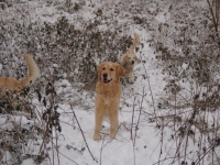 Nikki sneeuw
